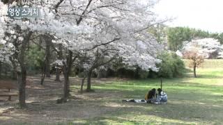 영상스케치 - 포항, 벚꽃 만개