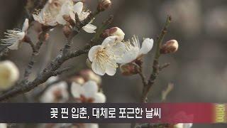 꽃 핀 입춘, 대체로 포근한 날씨