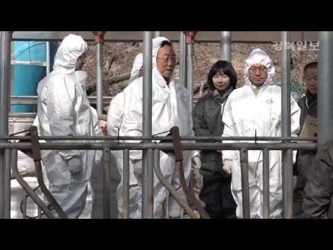 김관용 경북도지사, 구제역 백신접종 현장 점검