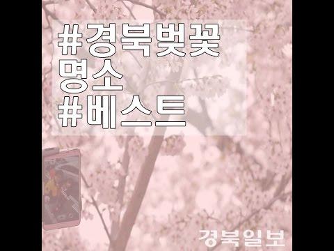 경북 벚꽃 명소 베스트