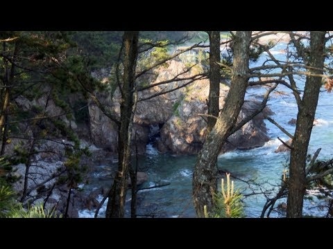 [해파랑길을 걷다] 3. 나정고운모래해변 ~ 송대말 등대 4.7km 구간