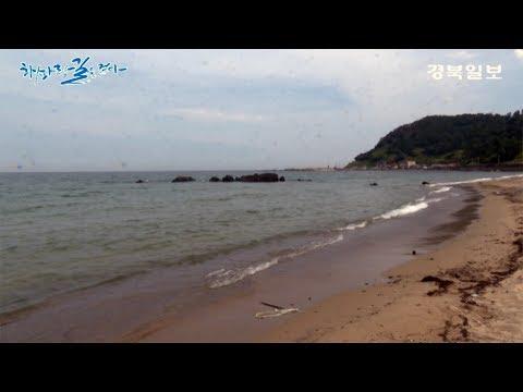 [해파랑길을 걷다]6. 포항 장기면 신창리~모포리