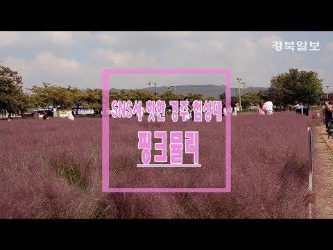 [영상] 추석연휴 경주 첨성대 '핑크뮬리' 서 인생사진 찍으세요