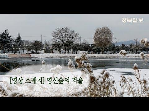 [영상 스케치]문경 영신숲의 겨울