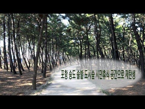 [영상] 포항 송도 솔밭 도시숲, 시민휴식 공간으로 재탄생