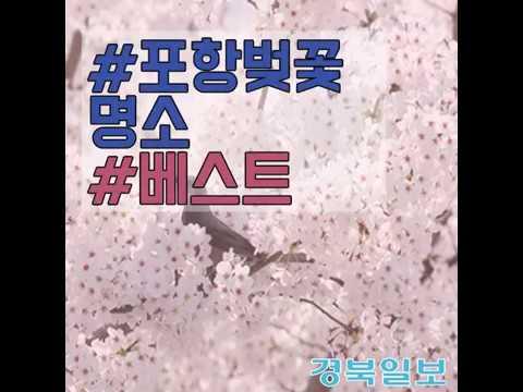 [카드 뉴스] 포항 벚꽃 명소 베스트5