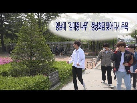 [영상]영남대 '김대중 나무', 정상회담 맞아 다시 주목