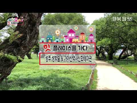 [핫플레이스를 가다] 19. 성주 성밖숲 & 가야산역사신화테마관